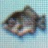 Crucian carp.jpg