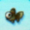 Pop eyed goldfish.jpg