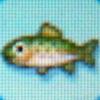 Rainbow trout.jpg